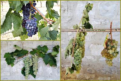 mostaccioli e mosto cotto, come farli in casa, uva
