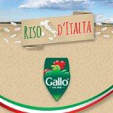 banner gallo 1