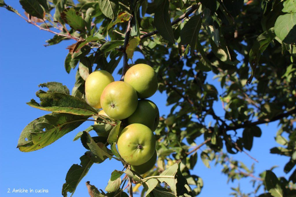 Torta di mele 10 ricette facile tutte da provare