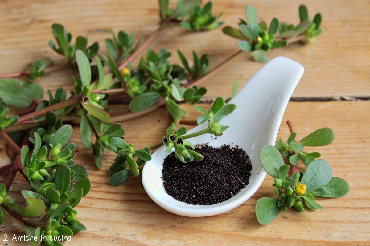 semi di portulaca da utilizzare in cucina